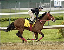 Afleet Alex Looks Good in Final Derby Prep