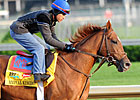 Animal Kingdom a Team Valor Derby Product
