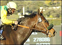 Halfbridled Draws Inside Post in Santa Anita Oaks