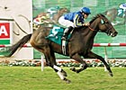 Horse of the Year Arravale Retired