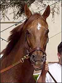 2003 Eclipse Older Female of the Year: Azeri