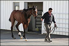 Barbaro Update: Podiatry Specialist Examines Derby Winner
