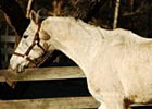 Retired Racehorse Spotlight: Icy Edge