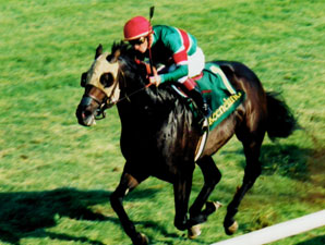 Champion Queena Euthanized