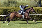 Brancusi Breezes on Grass at Keeneland