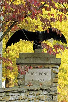 Buck Pond Releases 2008 Stallion Fees
