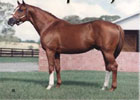 Bucksplasher, Sired Champion Buck's Boy, Dead