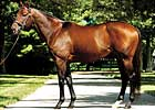 Candy Ride Sires First Winner