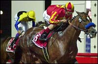 Dubai World Cup Report: Captain Steve Triumphs