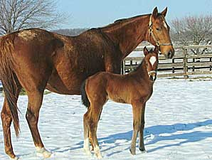 Cherokee's Boy Sires First Foal