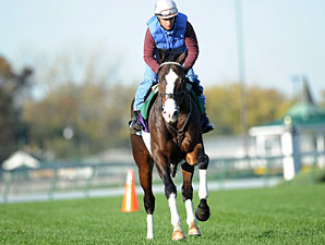 Courageous Cat works at Churchill Downs 10/31/2011.