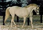 BC Winner/Sire Cozzene Dead