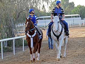 U.S. Horses Impress in Dubai Workouts