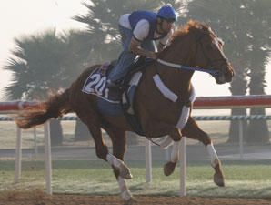 Curlin in Sharp Workout for World Cup