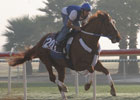 Curlin 'Awesome' in World Cup Workout
