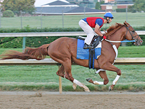 It's Back to Work for Curlin