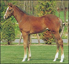 Dance in the Dark Foal Brings Record Price