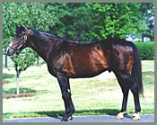 Leading Sire Danzig Pensioned at Claiborne