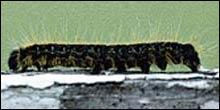 MRLS Test Results Show Caterpillar Correlation