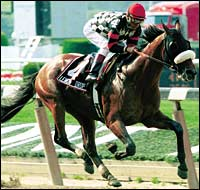 Eclipse Awards: Older Male: Lemon Drop Kid