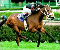 Eclipse Awards: Turf Female: Perfect Sting
