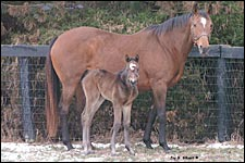 Empire Maker's First Foal Is a Filly