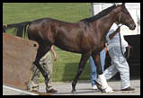 Essence of Dubai, Oaks Contenders in Kentucky