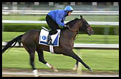 Steve Haskin's Derby Report (4/25): Day of Godolphin