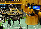 A.P. Indy-Maryfield Colt Brings $1.2 Million
