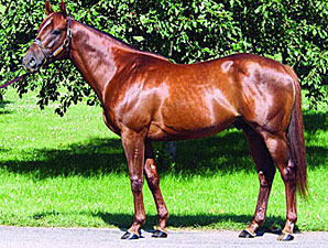 First Samurai Sires First Winner