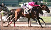 Lily's Affair Tries Rampart Handicap