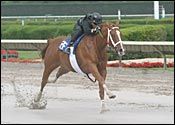 Good and Tough Filly is Good and Fast
