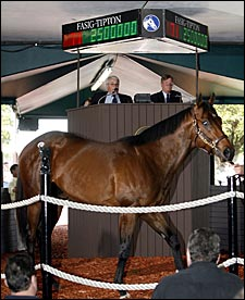 Gross, Average Fall for FT Calder; Storm Cat Colt Brings $2.5 Million