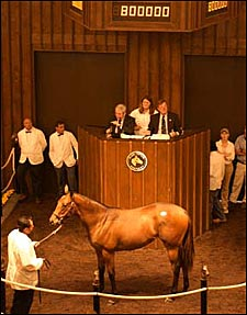 Fusaichi Pegasus Filly Brings $800,000 at Fasig-Tipton, But Gross and Average Suffer Setbacks