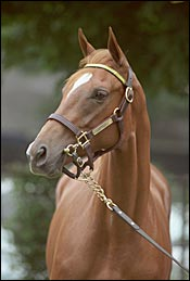 $1.1-Million for Storm Cat Filly at Saratoga