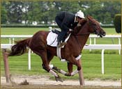 Funny Cide Works in :47 1/5 for Preakness