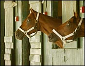 Saratoga Notebook: Funny Cide Day Aug. 13; Sackatoga 2-Year-Old Debuts; Coa, Velasquez Suspended