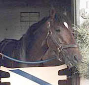 Angel Fever, Dam of Fusaichi Pegasus, Dies at Age 14