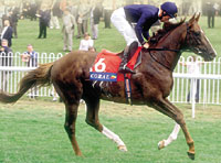 European Star Giant's Causeway to Stud at Coolmore in 2001
