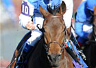 Slideshow: Breeders&#39; Cup 2010 Day 2