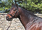 Major Stallion Grand Slam Dies