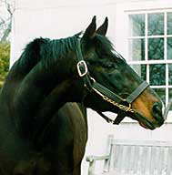 Pensioned Sire Green Dancer Euthanized