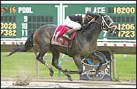 Happy Trails Streaks to Jersey Derby Victory