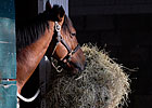 Feeding Racehorses