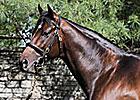 Henrythenavigator's First Foal