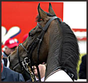 2003 Eclipse Grass Male of the Year: High Chaparral