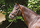 Champion High Chaparral Euthanized at 15