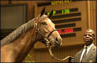 Seeking the Gold Filly Brings $3.7 Million
