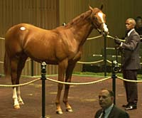 Galileo's Full Brother, $6.8-Million Yearling Entered at Newbury Friday
