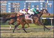 A Horse for the Course: Histoire Sainte Wins Again at Fair Grounds